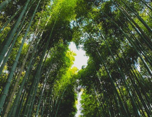 La historia del bambú japonés y la enseñanza que nos aporta